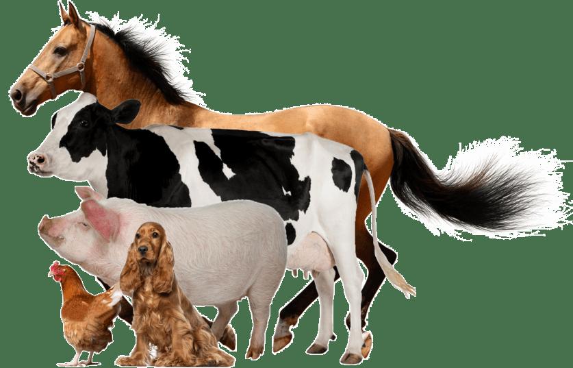 djurförsäkring